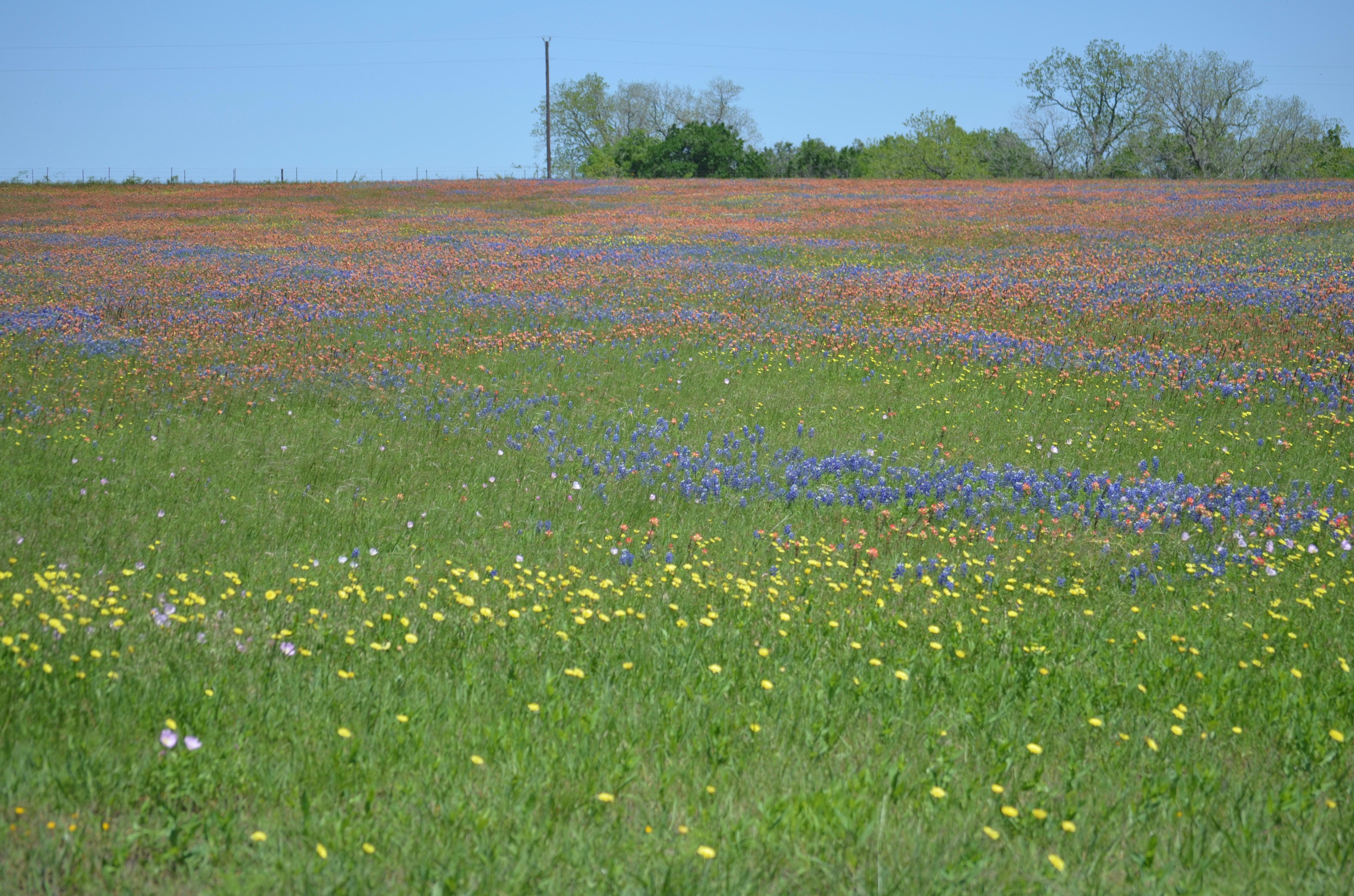 Name:  180415_WoB_Wildflowers_02.jpg Views: 57 Size:  3.44 MB
