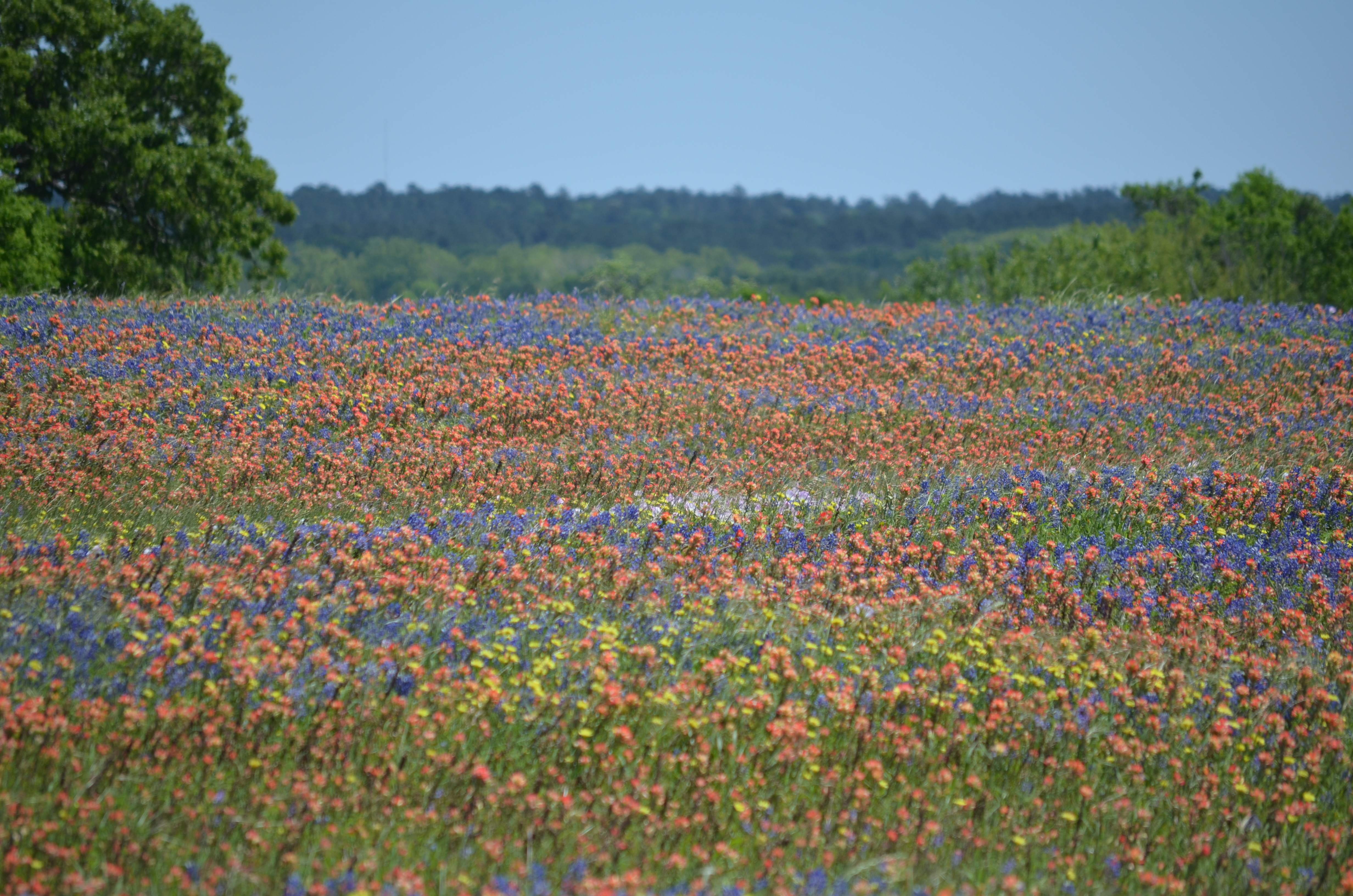 Name:  180415_WoB_Wildflowers_09.jpg Views: 51 Size:  3.30 MB