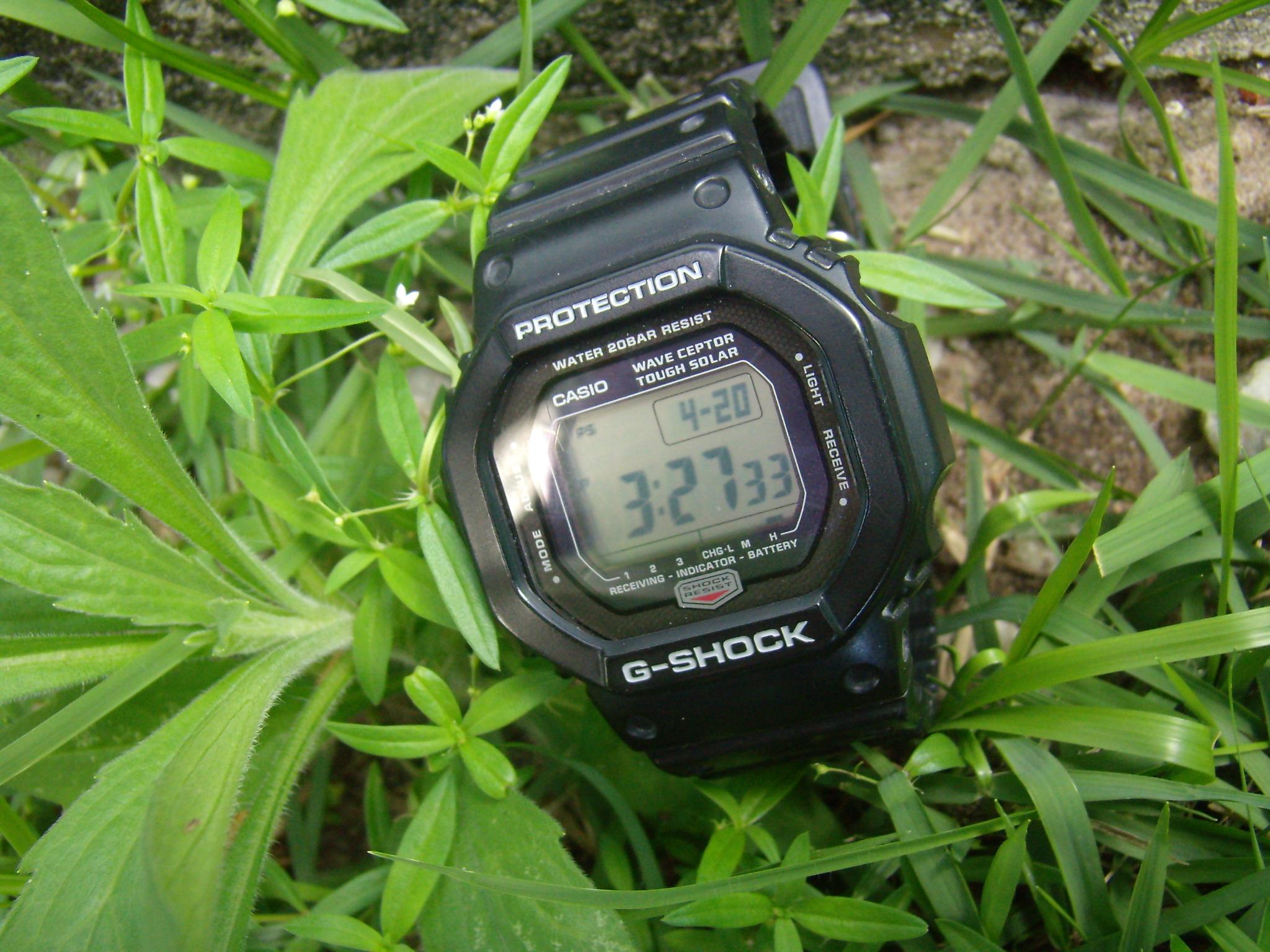 Name:  5600j_floresta2.JPG Views: 304 Size:  770.8 KB