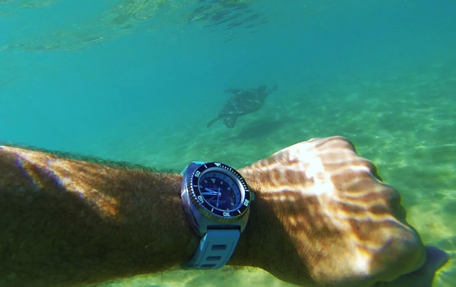 Name:  Aquadive Turtle (2).jpg Views: 272 Size:  388.2 KB
