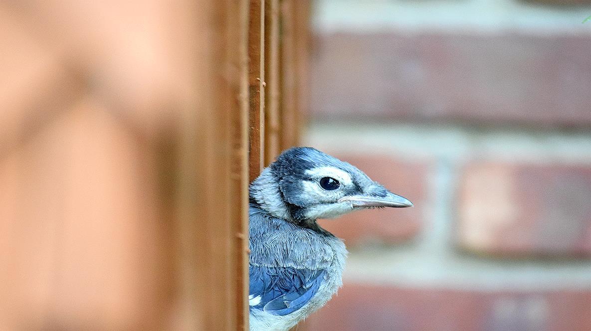 Name:  Bird in Lattice.jpg Views: 77 Size:  109.0 KB