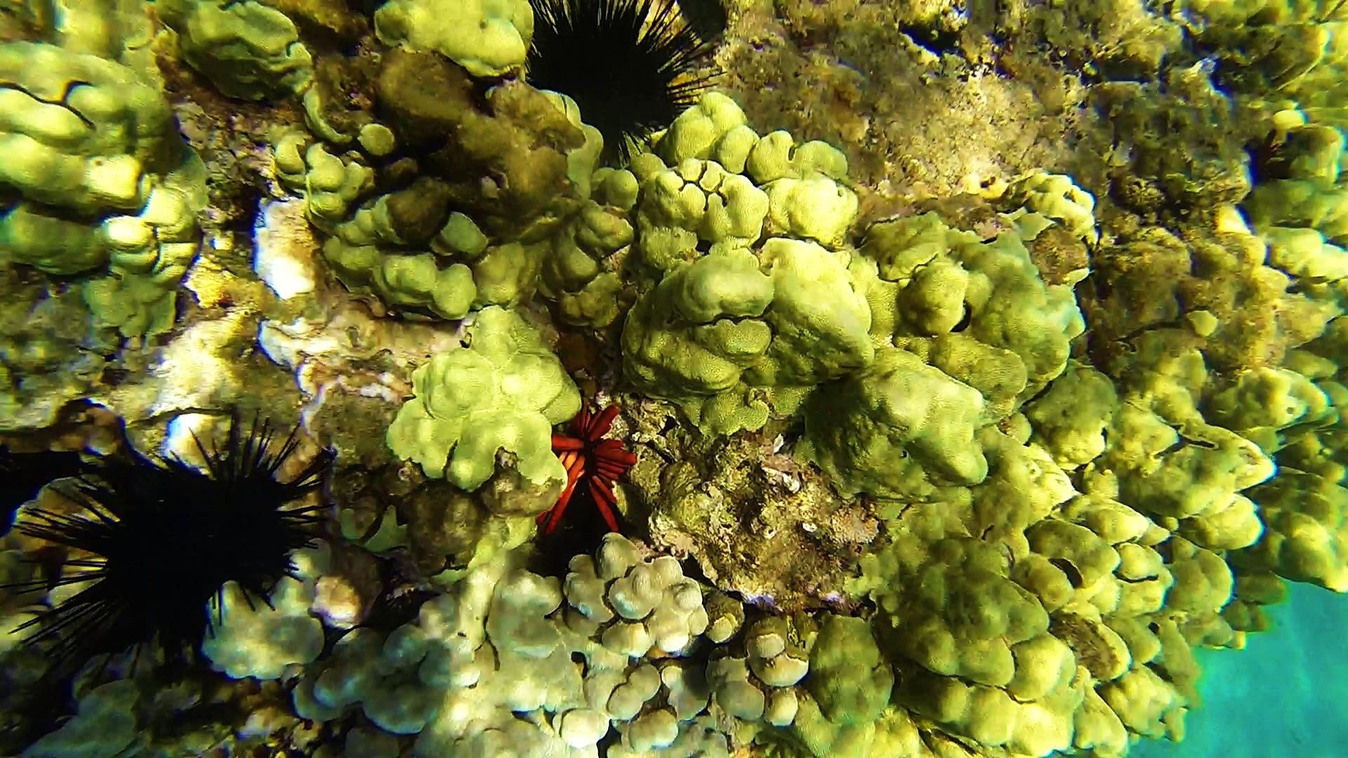 Name:  Coral reef (2).jpg Views: 269 Size:  1.07 MB