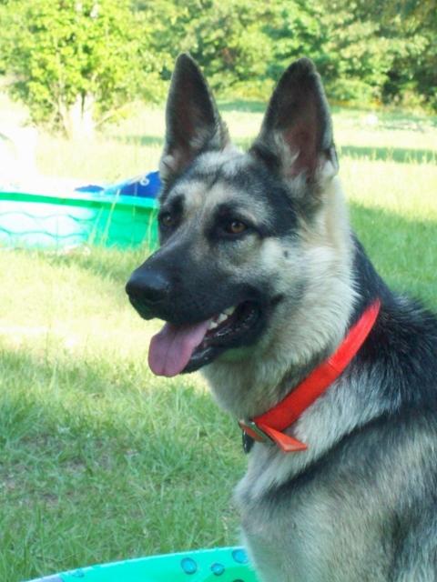 Name:  dog99.jpg Views: 1900 Size:  249.6 KB