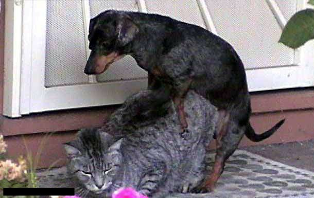 Name:  dog_cat.jpg Views: 318 Size:  41.7 KB