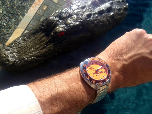 Name:  doxa 4000 Gator.JPG