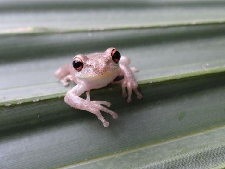 Name:  Frog.jpg Views: 46 Size:  217.5 KB