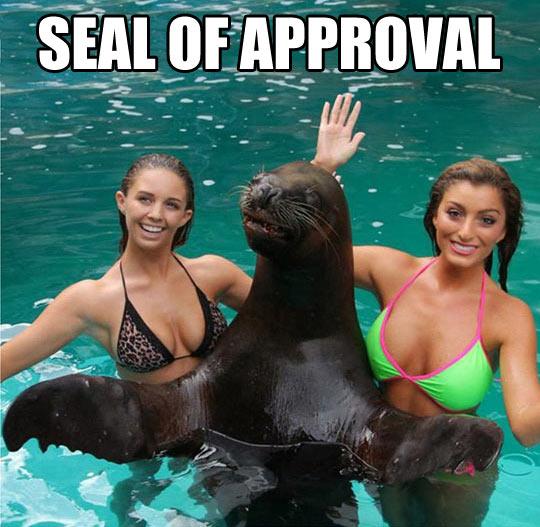 Name:  funny-girls-sea-seal-water-salute1.jpg Views: 555 Size:  66.9 KB