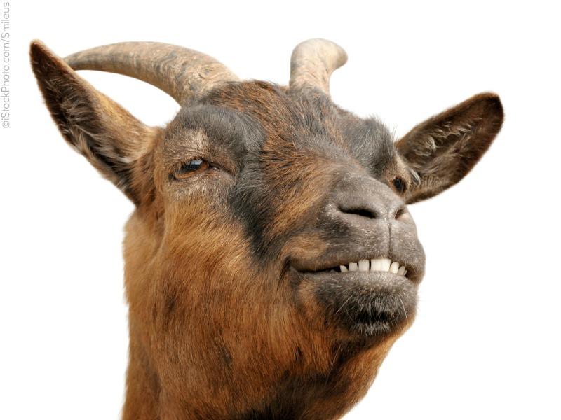 Name:  goat_2D00_list_2D00_4.jpg Views: 273 Size:  120.6 KB