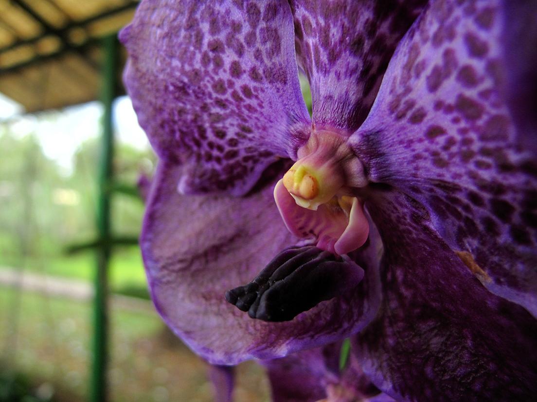 Name:  orquidea_morada.jpg Views: 1029 Size:  798.1 KB