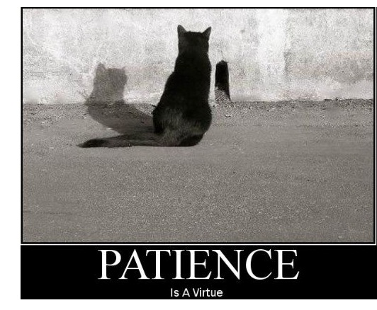 Name:  patience.jpg