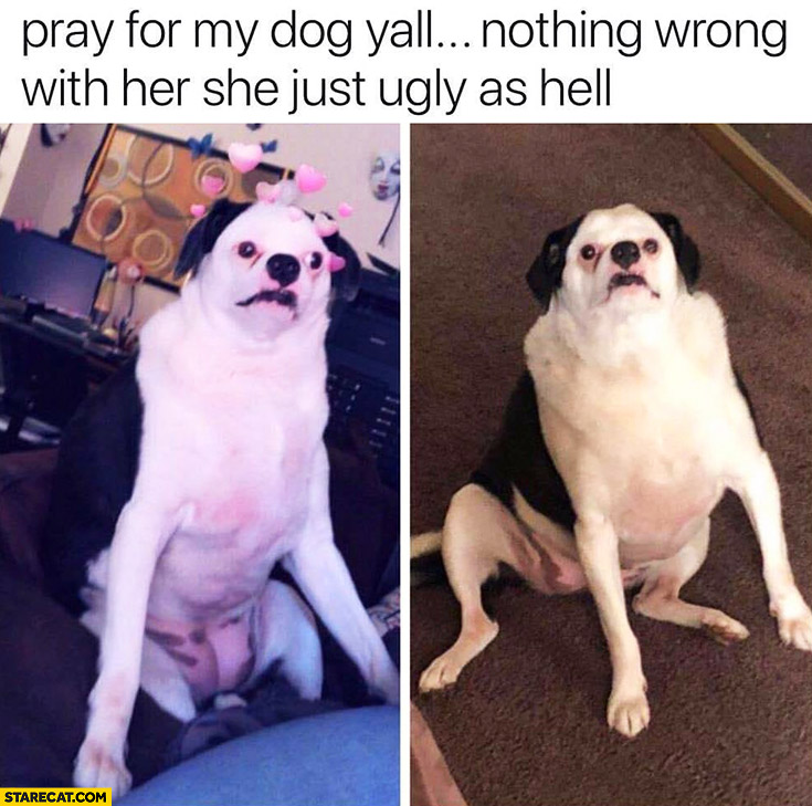 Name:  pray-for-my-dog-yall-nothing-wrong-with-her-she-is-just-ugly-as-hell.jpg