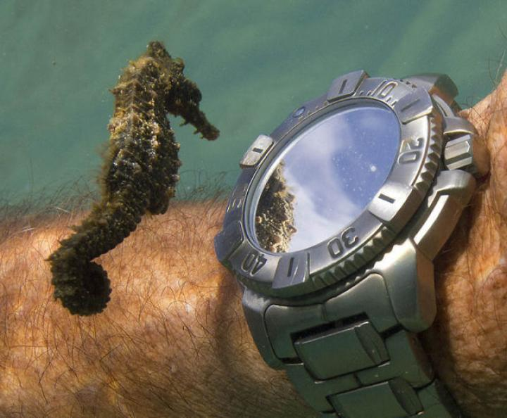 Name:  seahorse.jpg