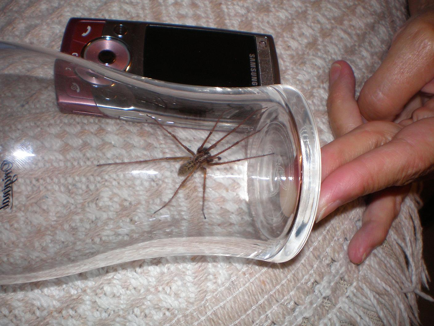 They re alright spiders if they move slowly its the quick ones that