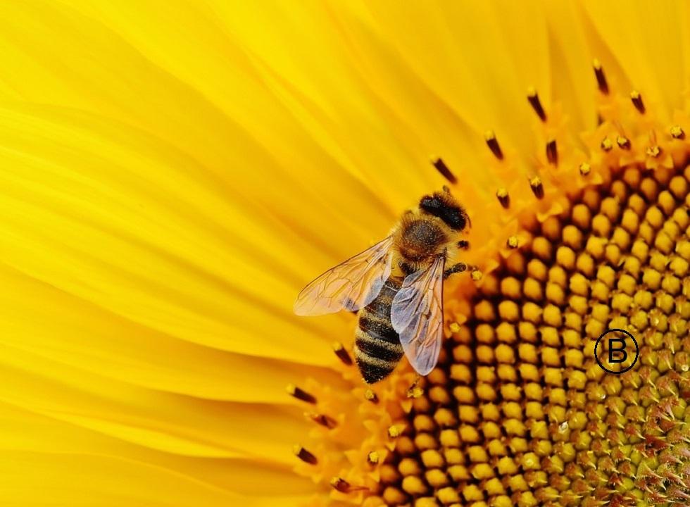sun-flower-1643794_960_720