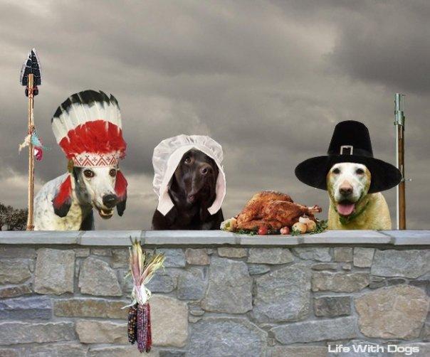 Name:  Thanksgiving 2.jpg Views: 100 Size:  54.8 KB