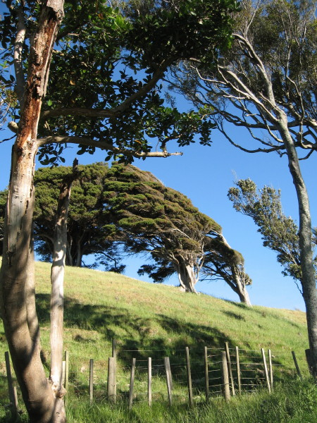 Name:  Trees_on_hill1_1.jpg Views: 142 Size:  161.5 KB
