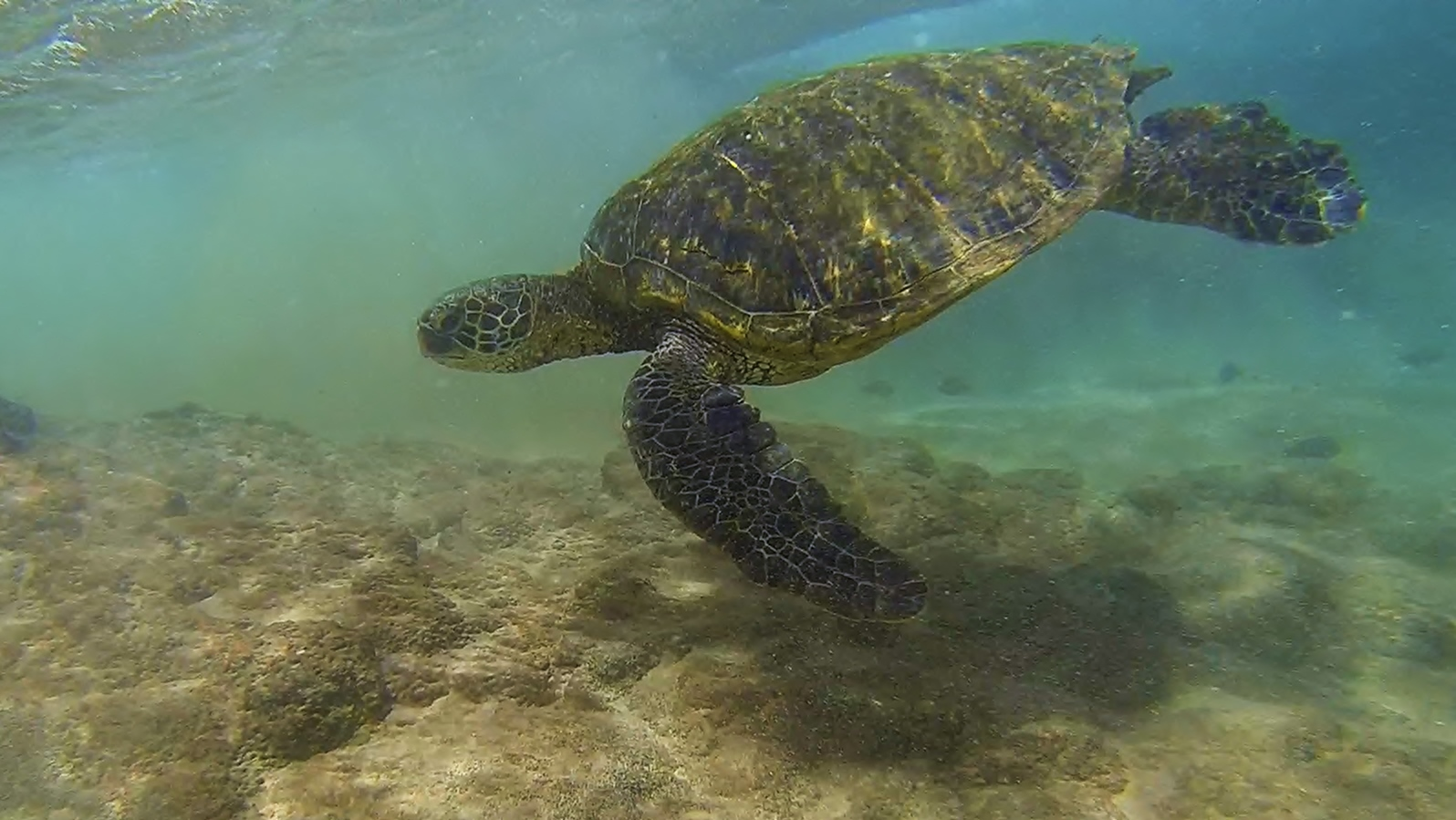 Name:  Turtle (2).jpg
