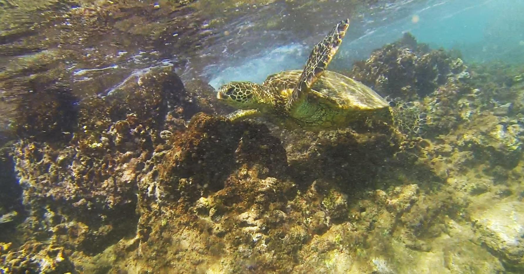 Name:  Turtle2 (2).jpg Views: 275 Size:  846.7 KB
