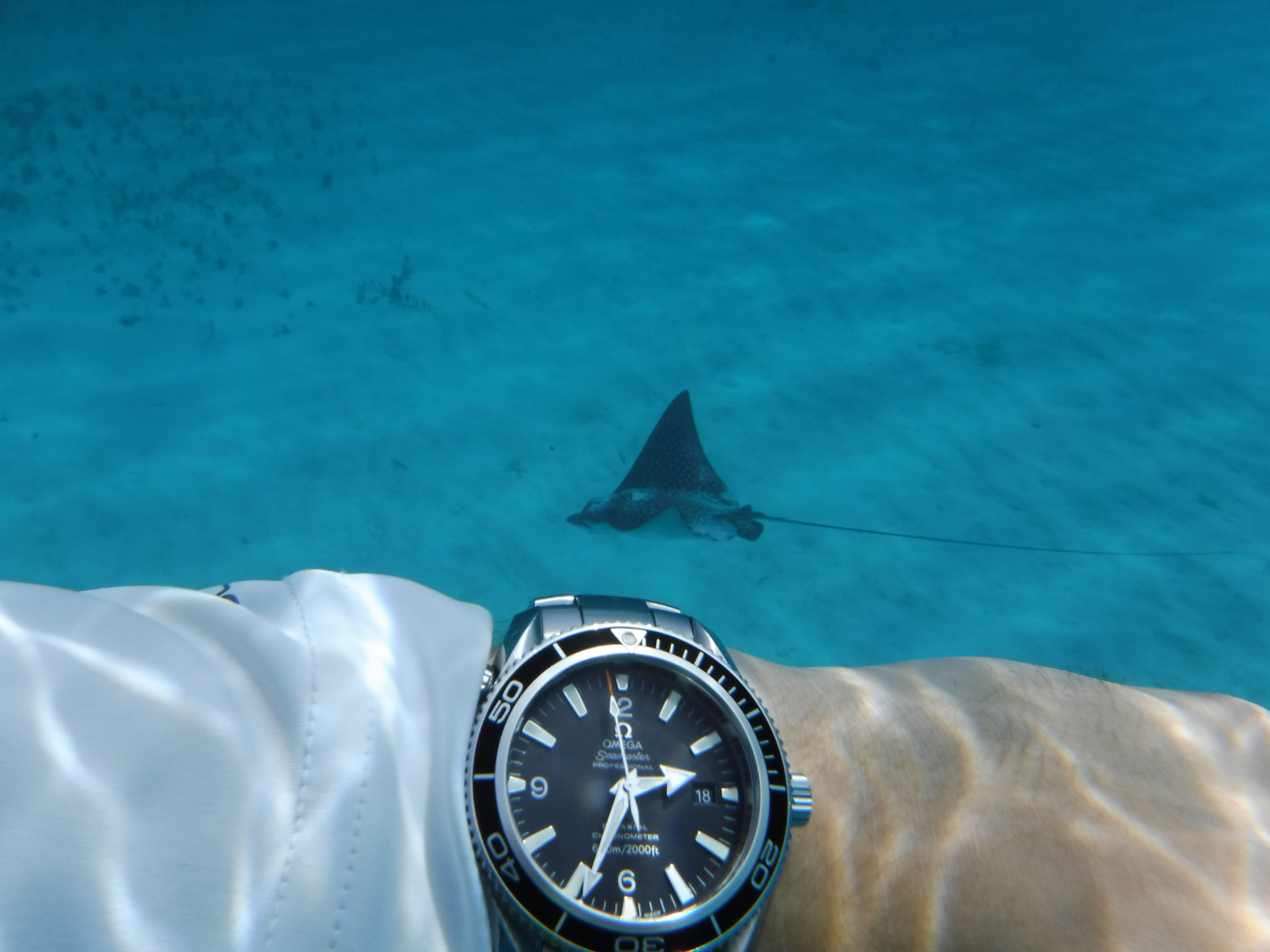 Name:  with eagle ray 2.JPG Views: 714 Size:  916.5 KB